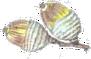 img-acorn2